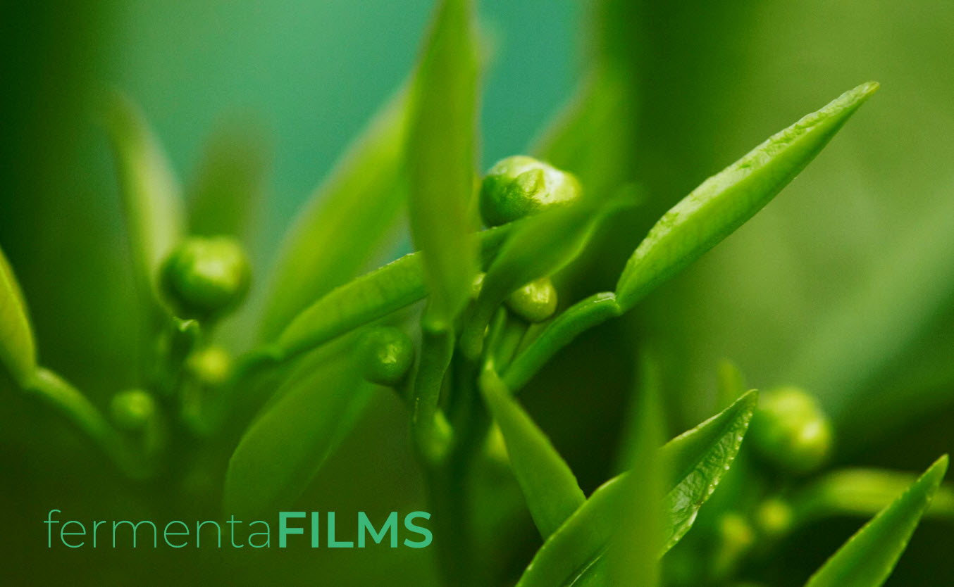 fermentafilms